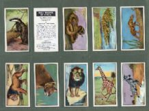 TRADE/ Tabacco cards set Wild Wisdom in Africa, Witch Dr, Elepha